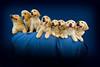 Puppies I 4716 copy