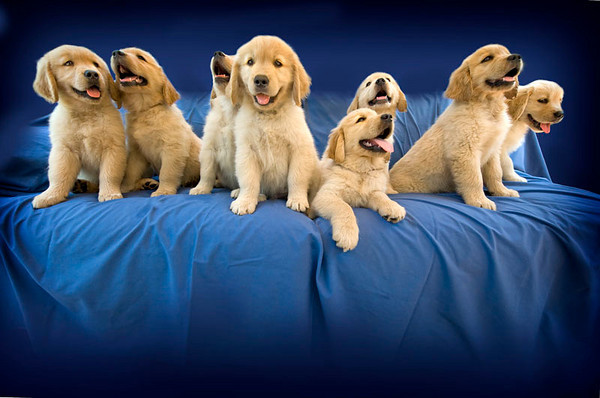 Puppies D 4839 copy