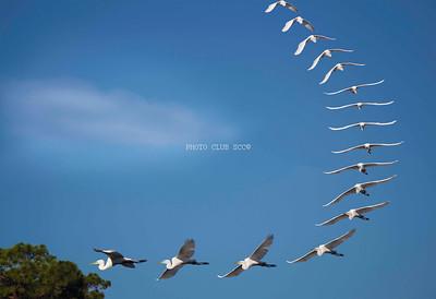 CREATIVE PRINT - 2ND PLACE -FLIGHT PATH - ANDRE LEDOUX