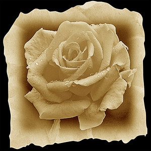 DIGITAL - CREATIVE - 2ND PLACE - SEPIA ROSE - ROBERT WINCH