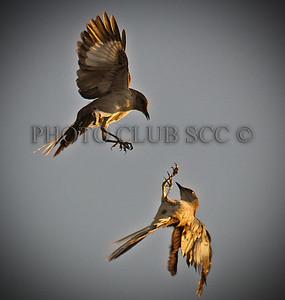 DIGITAL COLOR - UNASSIGNED - 2ND PLACE - KUNG FU BIRDS - STEVE McTEAGUE