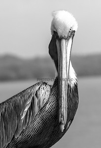 MONOCHROME PRINT - ADVANCED - GOLD -WHAT ARE YOU LOOKING AT? - ANDY LEDOUX