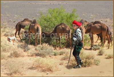 PRINT - COLOR - MASTER - YOUNG CAMEL HERDER - PATT SULZBERGER