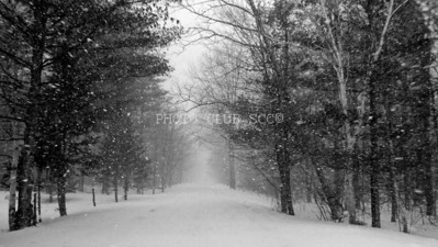 DIGITAL - MONOCHROME - LEVEL 1 - GOLD - SPRING SNOW IN VERMONT - FRED DURR