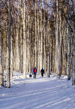 PRINTS-COLOR-LEVEL 1-SILVER-STROLL AMONG THE BIRCHES-CELIA STAPLES