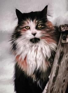 DIGITAL-CREATIVE-SILVER-CAT ON A LADDER-CAROL FELDHAUSER