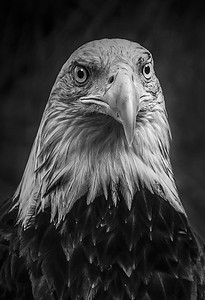 PRINT-MONO-MASTER-SILVER-PARK THAT MAJESTIC LOOK-JACKIE HANSEN