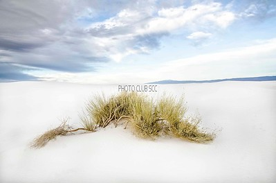 PRINT-COLOR-ADVANCED-GOLD-CRAWLING ON WHITE SANDS