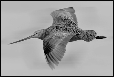 PRINT-MONO-MASTER-SILVER-FLYING IN FORMATION-PAT JONES