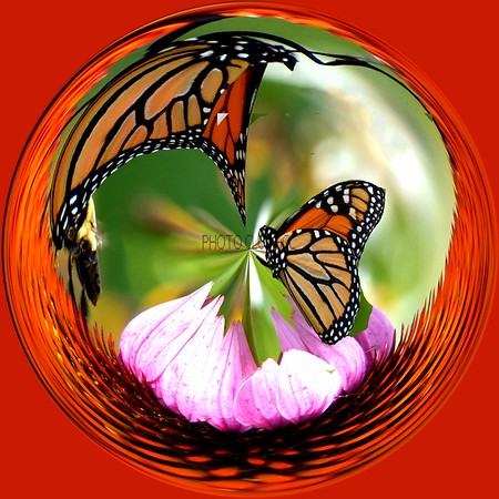 DIGITAL-CREATIVE-SILVER-BUTTERFLY IN A GLOBE-PAT JONES