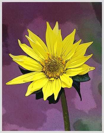 DIGITAL-CREATIVE-GOLD-YELLOW FLOWER MOSAIC-JACK MIGLIORE