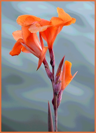 DIGITAL-COLOR-MASTER-GOLD-PAINTED BLOOM-PAT JONES
