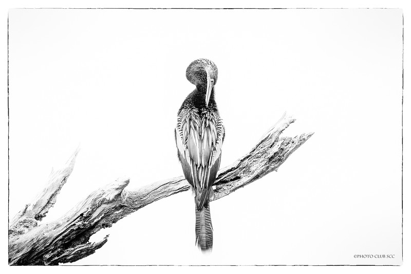 MONO DIGITAL-MASTER-SILVER-MORNING PREENING-BOBBIE RAY