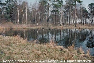 "Into this pond were dumped the ashes of many tens of thousands of people, mostly Jews, who were gassed at Krematorium IV, just behind and to the left. The ""little wood"" can be seen behind the pond. In those days, a fence of interwoven branches blocked the waiting victims' view of what lay ahead. photo 1979 For interactive map of Birkenau go to  http://www.remember.org/camps/birkenau/index.html"