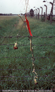 I arrived in Poland in June 1979 just a week after Pope John Paul II had conducted a mass at Birkenau. There were many places where people left flowers, many on the wires. The flower is as I found it.