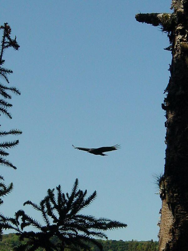 sightseeing - eagle
