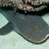 10 White tip reef shark