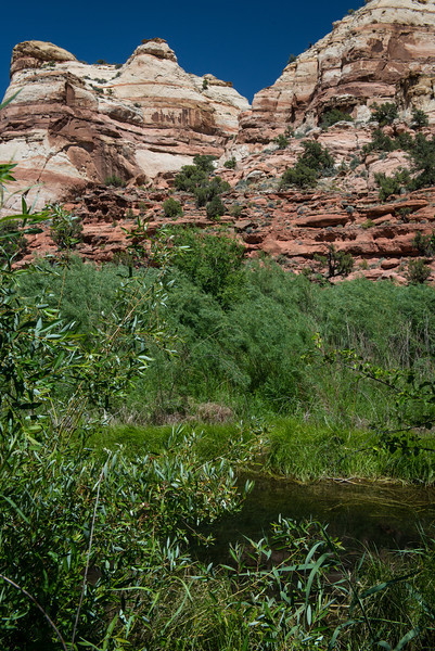 Upper Calf Creek Riparian 1