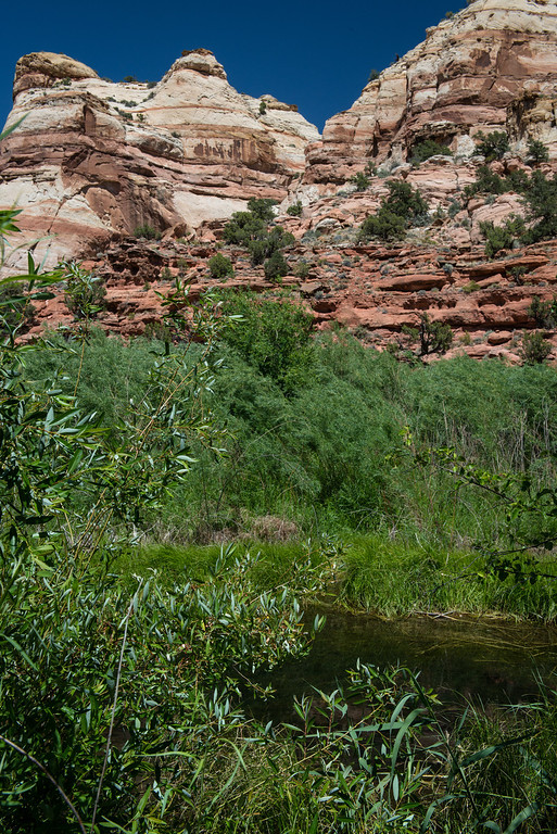 Upper Calf Creek Riparian 1