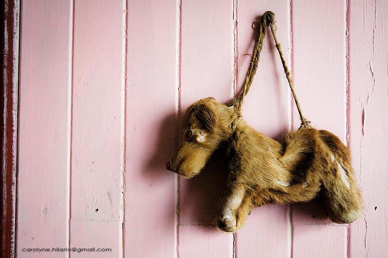 Toy Dog<br /> Tierra del Fuego, Chilean Patagonia