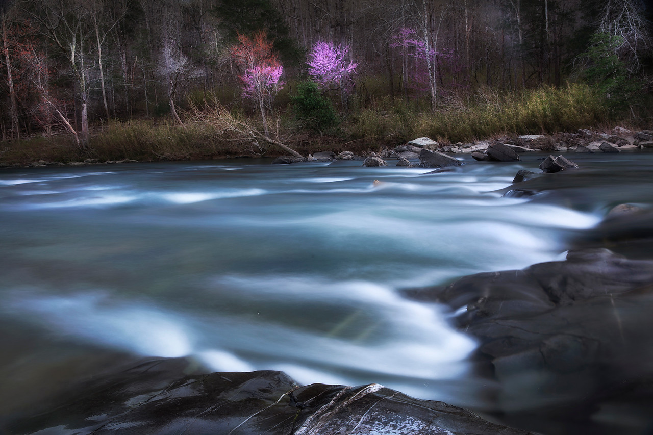 Heart of Spring - Cossatot State Park - April 2016