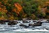 Devils Backbone - Cossatot River State Park
