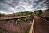 Bridges at Brushy Creek Area - Cossatot State Park