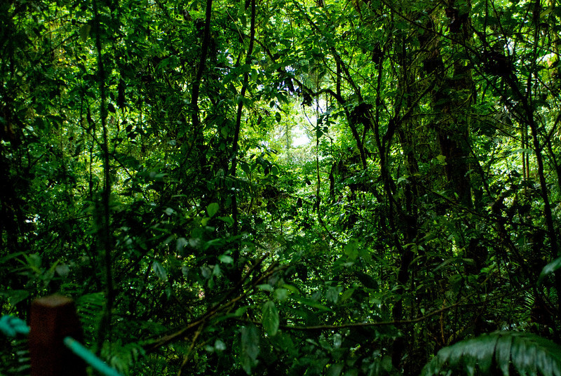 Jungle on Arenal Trail