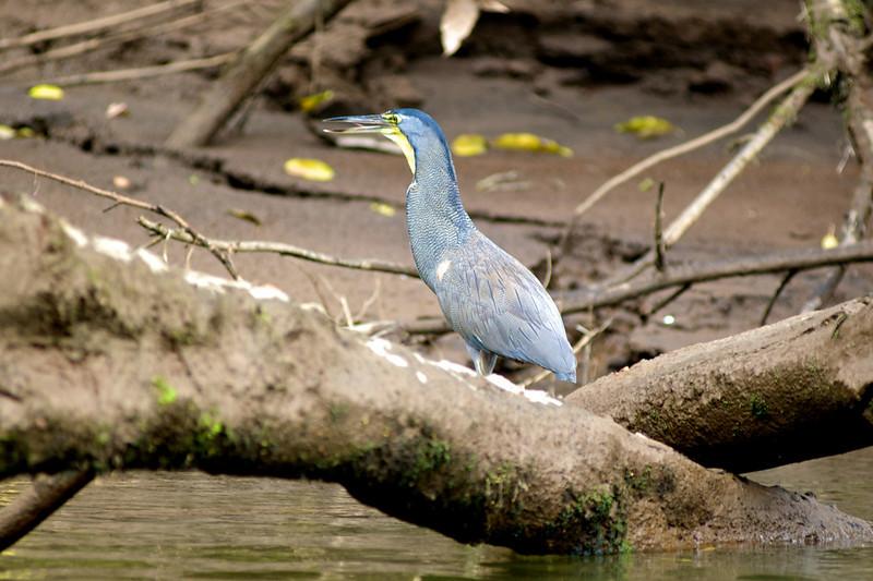 Bird Along River