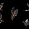Long Tongued Bats