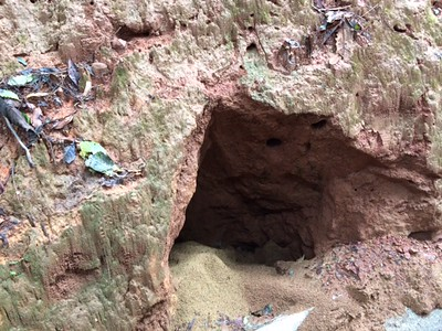 Ants made a nest in there, and the inside crumbles from the lack of support. Ants are still busily working