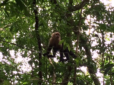 Sloth hanging around our hotel on electric line.