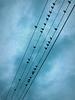 birdsOnWireMusicalStaffBEST