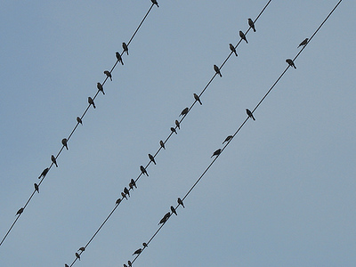 birdsOnWireMusicalStaffaA