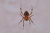 dscf1709_spider