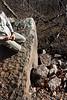 rock slide - 35