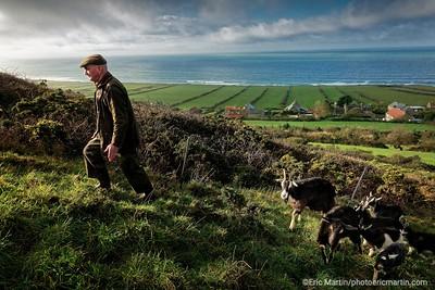 FRANCE. COTENTIN. Bruno Paysant – agriculteur, éleveur à Vauville. Il a recu la medaille de l'ordre agricole en  reconnaissance de son travail d'éleveur et de sa passion pour la préservation des races domestiques anciennes comme l'âne du Cotentin, l'âne de Normandie, différentes races bovines, le mouton roussin de la Hague, la chèvre des fossés, la poule cotentine, et, surtout, le cheval cob normand.