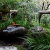 Japanese Temple Garden