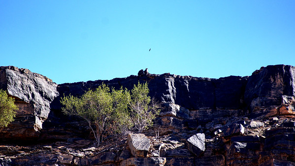 Baboons on the Ridge - Fish River Canyon