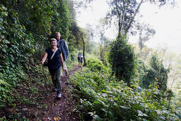 Gorilla Trek in Bwindi Impenetrable Forest
