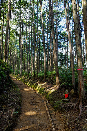 Kumano Kodo Trail in Kii Mountains, Japan