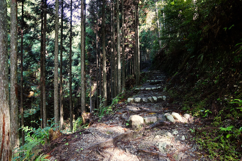 Kumano Kodo Trail in Kii Mountains