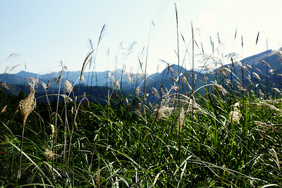 Kumano Kodo - Grass and Mountains