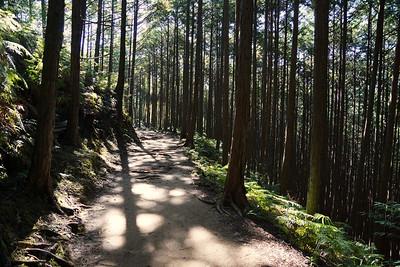 Kumano Kodo Trail - Kii Mountains