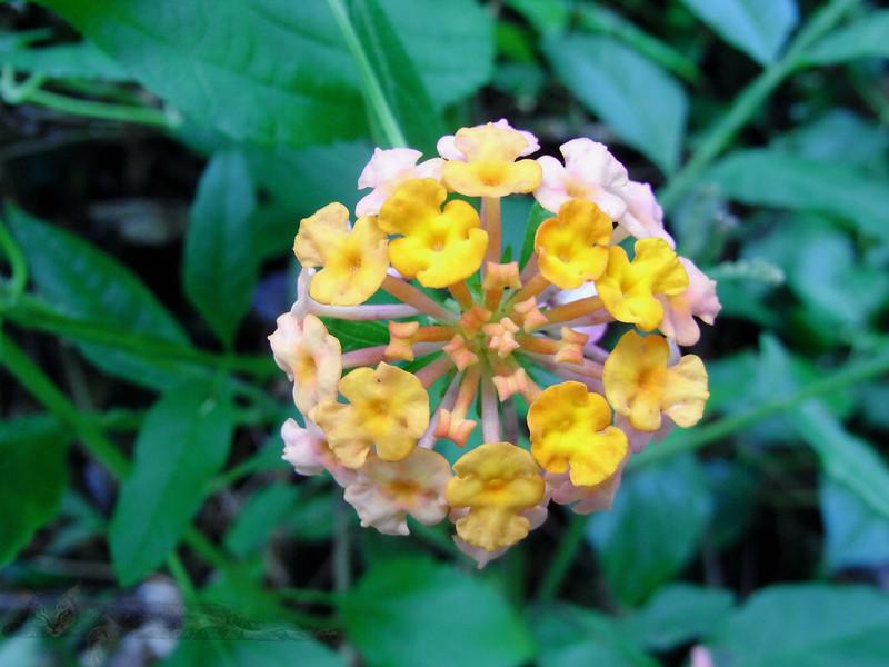 Flower in Malaysia