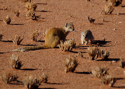 Mongoose Parent and Child