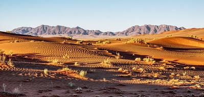 Desert at Sunrise Panorama