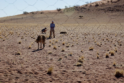 Watching the Cheetahs - Namibia