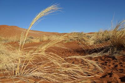 Sossusvlei - Grass Sand Sky - Namibia