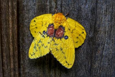 Khao Sok National Park - Yellow Butterfly